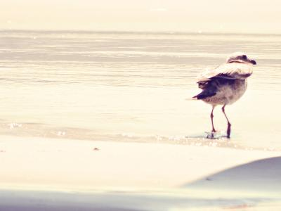 Bird at The Beach-Sylvia Coomes-Photographic Print