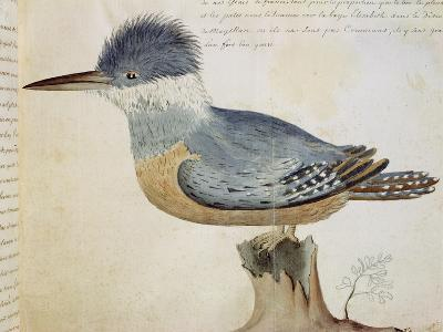 Bird, Close to the Jay of France, Near the Strait of Magellan--Giclee Print