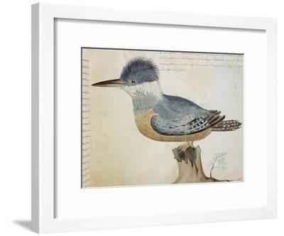 Bird, Close to the Jay of France, Near the Strait of Magellan--Framed Giclee Print