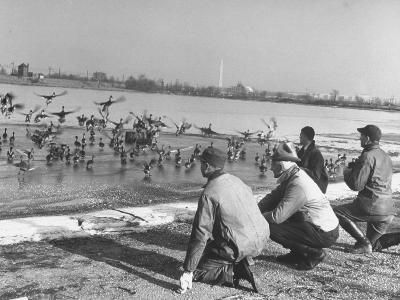 Bird Counters of the Audubon Society Observing Flock of Pintail and Mallard Ducks-Francis Miller-Premium Photographic Print