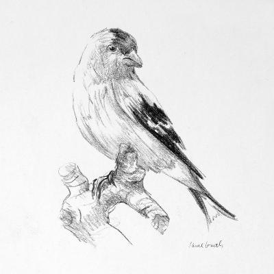 Bird Drawing II-Lanie Loreth-Premium Giclee Print