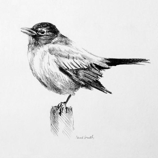 Bird Drawing III-Lanie Loreth-Premium Giclee Print