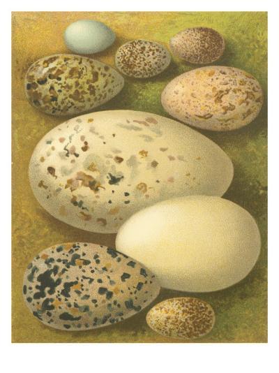 Bird Egg Collection I-Vision Studio-Art Print