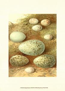 Bird Egg Collection II