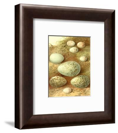 Bird Egg Collection II--Framed Art Print