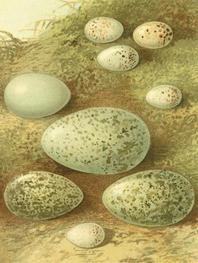 Bird Egg Collection II-Vision Studio-Art Print