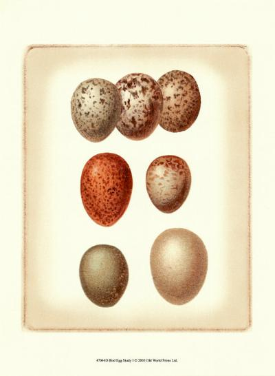 Bird Egg Study I--Art Print