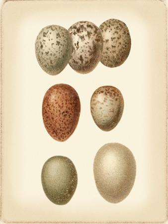 Bird Egg Study I