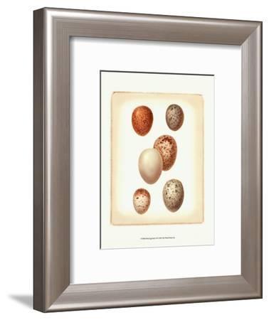 Bird Egg Study III--Framed Art Print