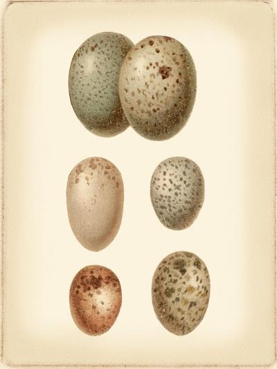 Bird Egg Study IV-Vision Studio-Art Print