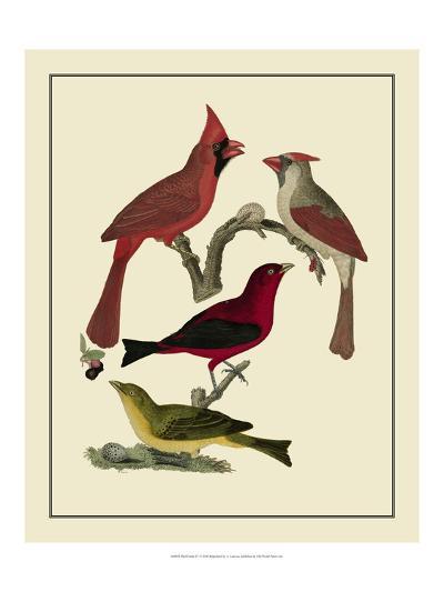 Bird Family IV-A^ Lawson-Art Print