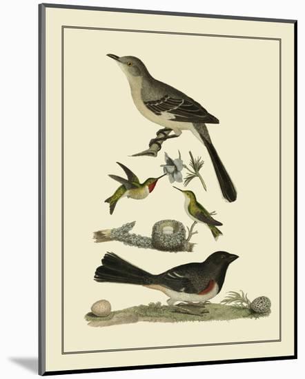 Bird Family V-A^ Lawson-Mounted Art Print