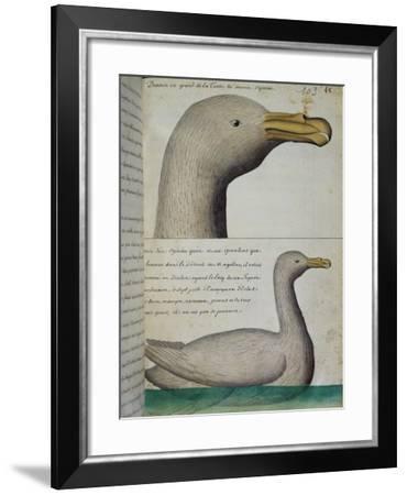 Bird from Strait of Magellan--Framed Giclee Print