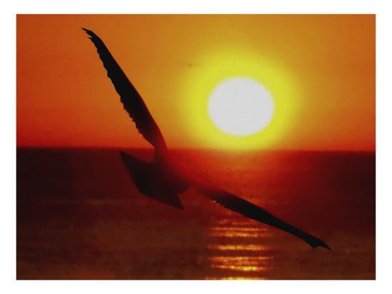 Bird Gliding into Setting Sun-Rich LaPenna-Giclee Print