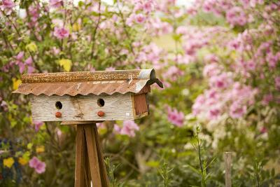 Bird House I-Philip Clayton-thompson-Photographic Print