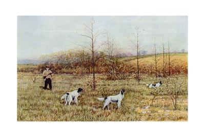 Bird Hunter with His Setters in the Field, Circa 1900--Photographic Print