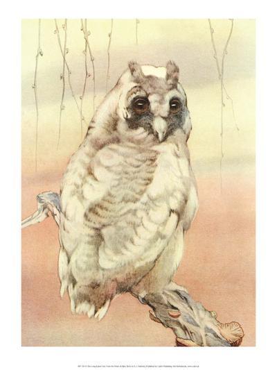 Bird Illustration, The Long - Eared Owl-Edward Detmold-Art Print
