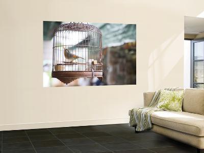 Bird in Cage at Mong Kok Bird Market-Greg Elms-Wall Mural