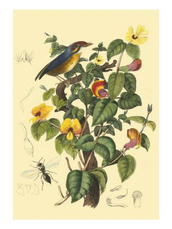 https://imgc.artprintimages.com/img/print/bird-in-nature-ii_u-l-q11afn50.jpg?p=0
