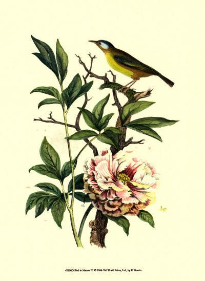 Bird in Nature III-E^ Guerin-Art Print