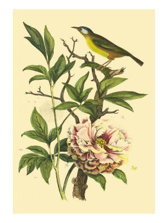https://imgc.artprintimages.com/img/print/bird-in-nature-iii_u-l-q11aflh0.jpg?p=0