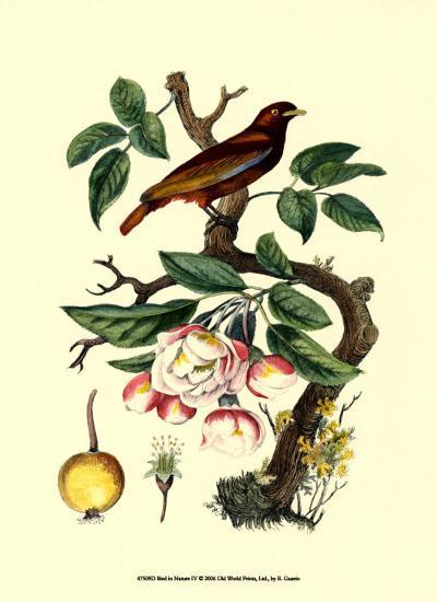 Bird in Nature IV-E^ Guerin-Art Print