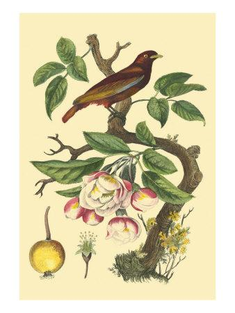 https://imgc.artprintimages.com/img/print/bird-in-nature-iv_u-l-q11afod0.jpg?p=0