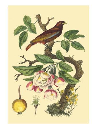 https://imgc.artprintimages.com/img/print/bird-in-nature-iv_u-l-q11afog0.jpg?artPerspective=n