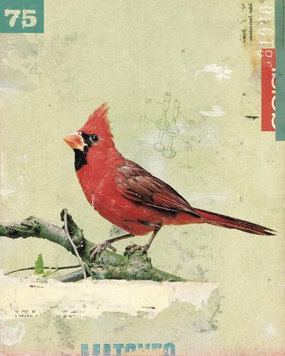 Bird IV-Kareem Rizk-Giclee Print