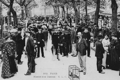 Bird Market, Paris--Giclee Print