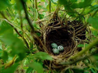 Bird Nest with Eggs-James P^ Blair-Photographic Print