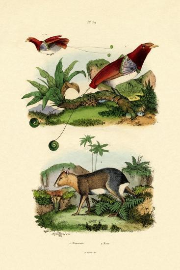Bird of Paradise, 1833-39--Giclee Print