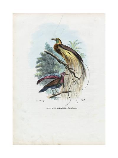 Bird of Paradise, 1863-79-Raimundo Petraroja-Giclee Print