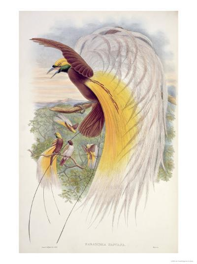 Bird of Paradise, from Birds of New Guinea-John Gould-Giclee Print