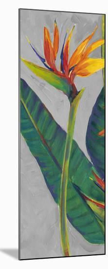 Bird of Paradise Triptych I-Tim OToole-Mounted Art Print