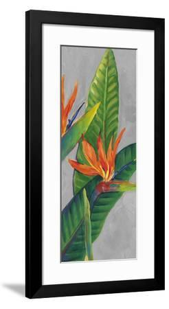 Bird of Paradise Triptych III-Tim OToole-Framed Art Print