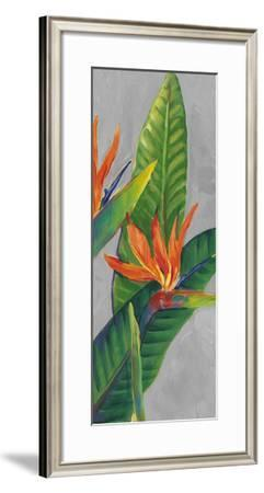 Bird of Paradise Triptych III-Tim OToole-Framed Art Print