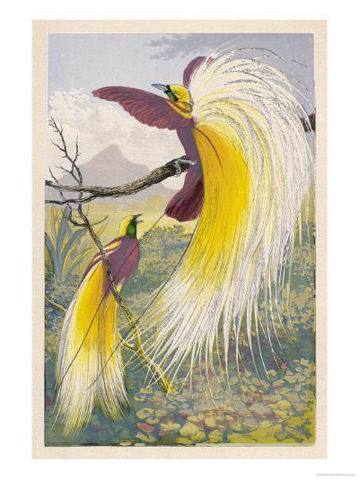 Bird of Paradise--Giclee Print