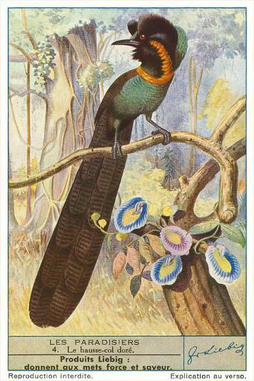 Bird of Paradise--Art Print