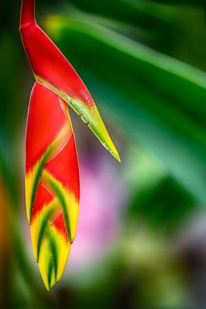 https://imgc.artprintimages.com/img/print/bird-of-paradise_u-l-q1dbaw00.jpg?p=0