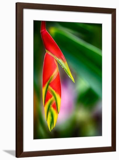 Bird of Paradise-Ursula Abresch-Framed Photographic Print
