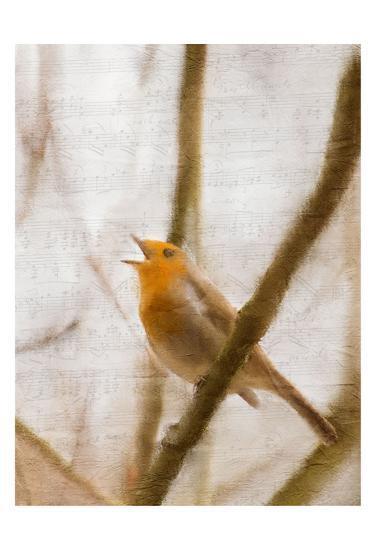Bird on a Branch 2-Kimberly Allen-Art Print