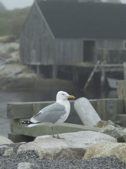 Bird on Foggy Pier Near House in Harbor--Photographic Print