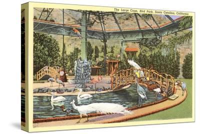 Bird Park with White Peacocks, Catalina
