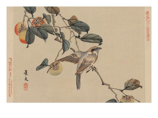 Bird Perched on a Branch from a Fruit Persimmon Tree.-Keibun Matsumura-Art Print