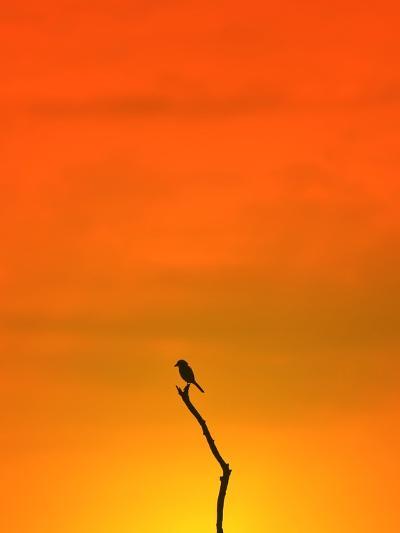 Bird Silhouette - Wildlife Background - Colors in Nature-Stacey Ann Alberts-Photographic Print