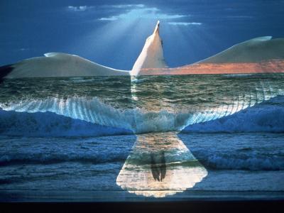 Bird Superimposed Over Ocean-Whitney & Irma Sevin-Photographic Print