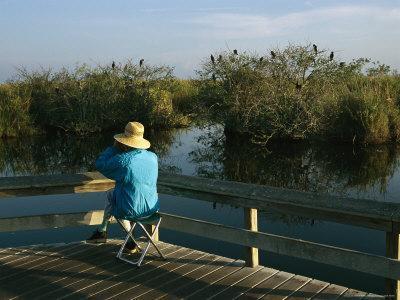 https://imgc.artprintimages.com/img/print/bird-watching-from-a-wooden-walkway-on-the-anhinga-trail_u-l-p5wm8y0.jpg?p=0