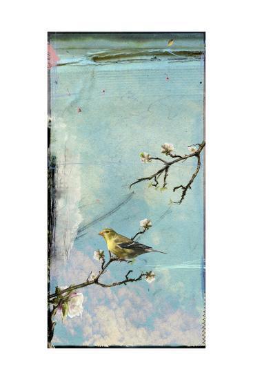 Bird Window II-Ingrid Blixt-Art Print