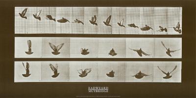 Bird-Eadweard Muybridge-Art Print